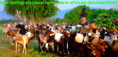 Horn of Africa's Journal: Customs of Herders in East Africa