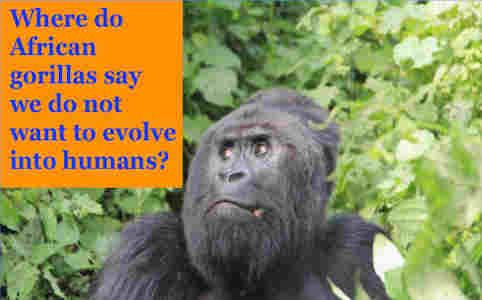 hoa-politicalscene.com/drc.html: DRC: The Democratic Republic of the Congo: Khalid Mohammed Osman's Political Quotes: Where do African gorillas say, we don't want to evolve into humans?