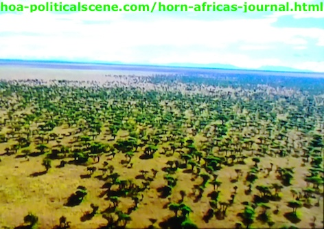 Horn of Africa's Journal: East Africa's Rainforest Dried and the Savannah Replaced It