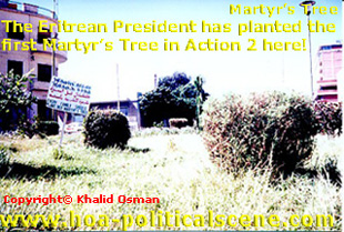 This is one of the Martyr's Trees planted by the Eritrean President in action 2 of my environment project.
