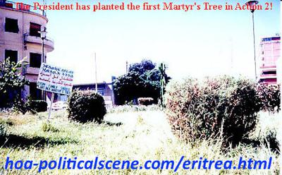 hoa-politicalscene.com/eritrean-hopes.html - Eritrean hopes: Martyr's tree in journalist Khalid Mohammed Osman's environmental project planted by the Eritrean President Isaias Afewerki on the Martyrs street.