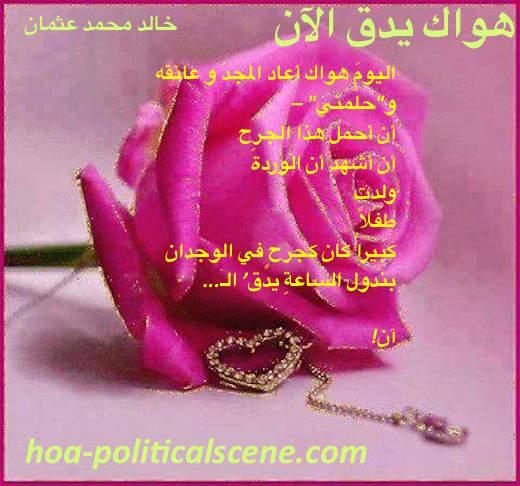 Your Love is Beating Now by poet & journalist Khalid Mohammed Osman on beautiful rose.