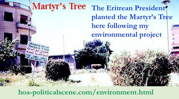 hoa-politicalscene.com/environment.html - Environment: A Martyr's Tree planted by the Eritrean President in action 2 of my environmental project, before the launch of the environment organization.