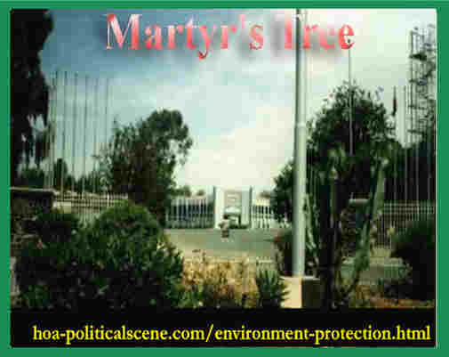 hoa-politicalscene.com/environment-protection.html - Environment Protection: Martyr's Tree at the gate of the Expo of Asmara planted as journalist Khalid Osman planned in his environmental project.
