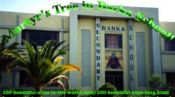 hoa-politicalscene.com/environment.html - Environment: The Martyr's Tree in Barka Secondary School in Asmara. Khalid Osman has engaged all the schools in Asmara in his environmental project.