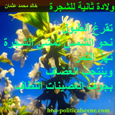 hoa-politicalscene.com - HOAs Design Gallery: Couplet of poetry from