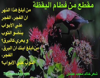 hoa-politicalscene.com - HOAs Photo Gallery: Couplet of love poetry from