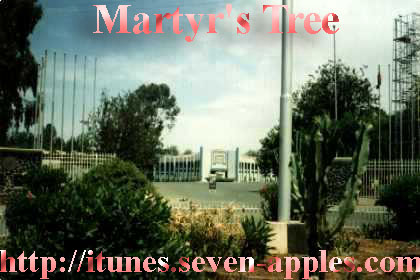 Martyr's Tree at the Entrance of the Expo in Asmara