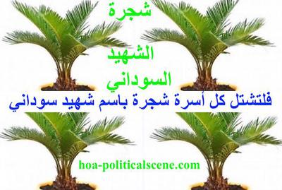 hoa-politicalscene.com/sudanese-martyrs-day-comments.html - The #dynamic_idea of the #Sudanese_Martyrs_Tree is by #Khalid_Mohammed_Osman.