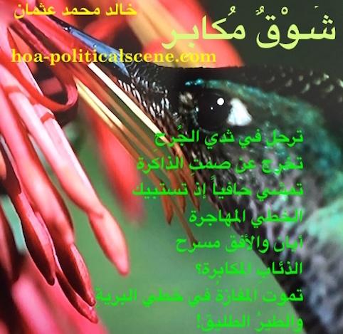 hoa-politicalscene.com/arabic-hoa.html - Arabic HOA: Poetry scripture from Arrogant Yearning by poet and journalist Khalid Mohammed Osman on beautiful bird sucking flowers nectar.
