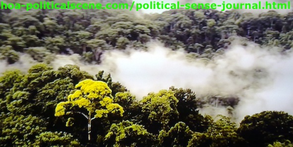 Political Sense Journal: East Africans Rainforest Existed for Million Years